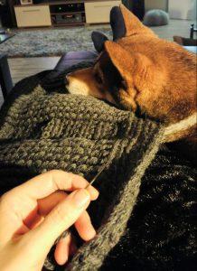 Amor spürt wenn ich entspannt bin und liebt es mit mir und der Wolle zu kuscheln