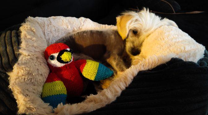 Polly Papagei… Nicky hat einen Vogel, aber einen schicken.